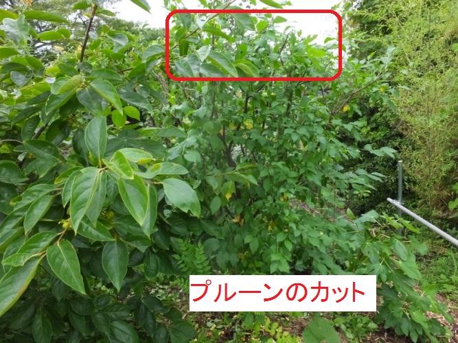 DSCF9802_1.jpg