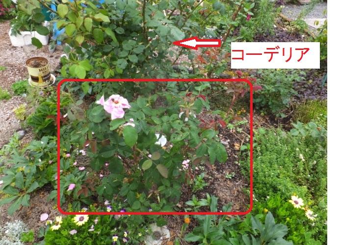 DSCF9834_1.jpg