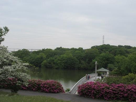 5月の琵琶が池