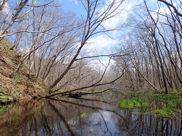 美々川の源流部12