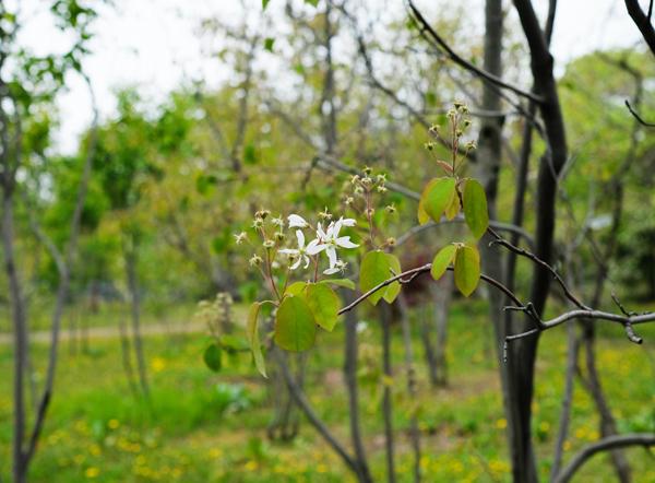 庭木を探す01