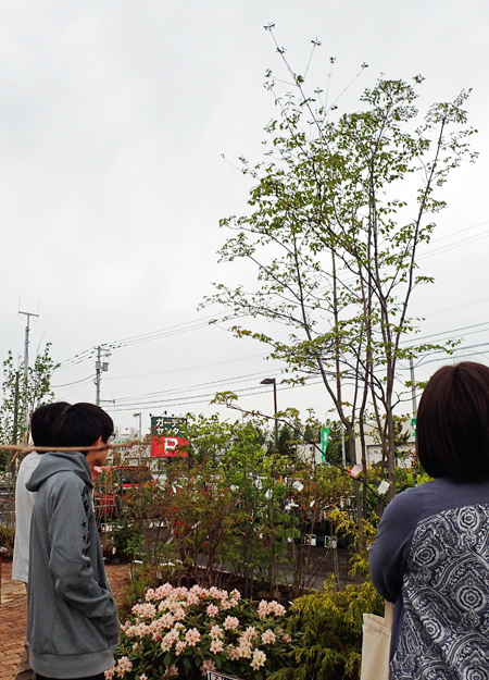 庭木を探す02