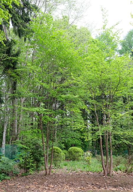 庭木を探す04