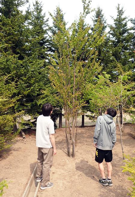 庭木を探す07