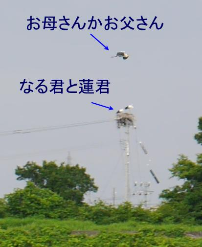 kounotori oyako06100010