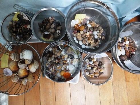 shells_04300001.jpg