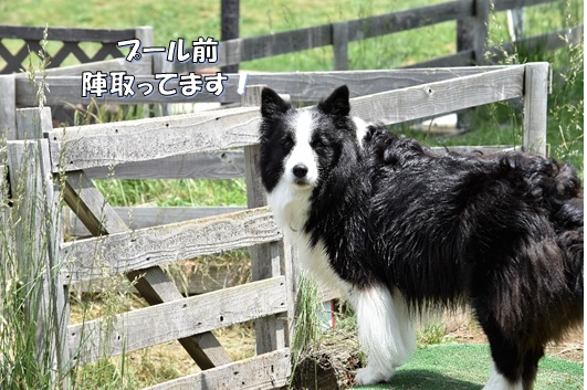 12_201706290040430a4.jpg