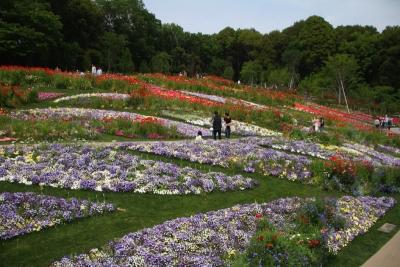 10万平米の花畑b_1