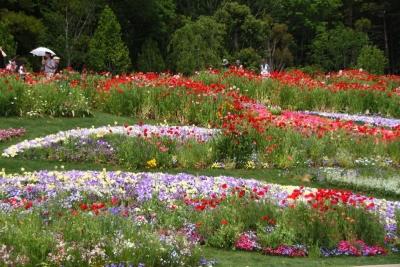 10万平米の花畑c_1
