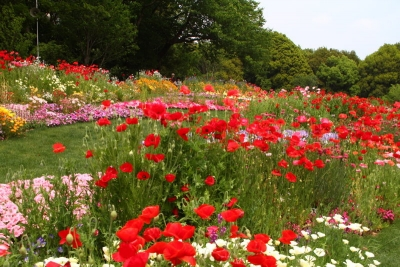 咲き競う花畑b_1