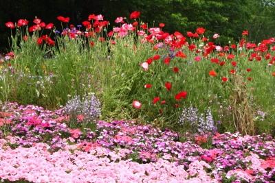 咲き競う花畑e_1
