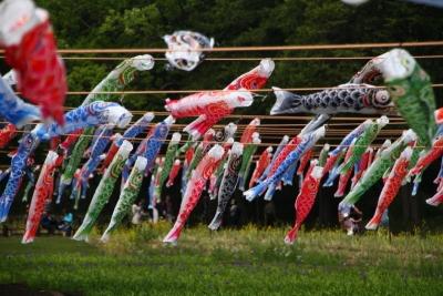 風に揺らぐ鯉のぼり_1