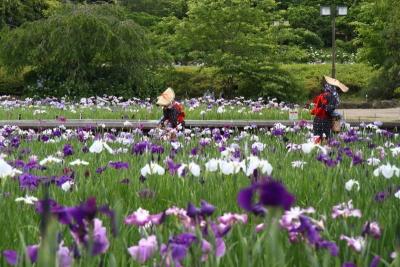 菅笠に紺絣花柄つみa_1