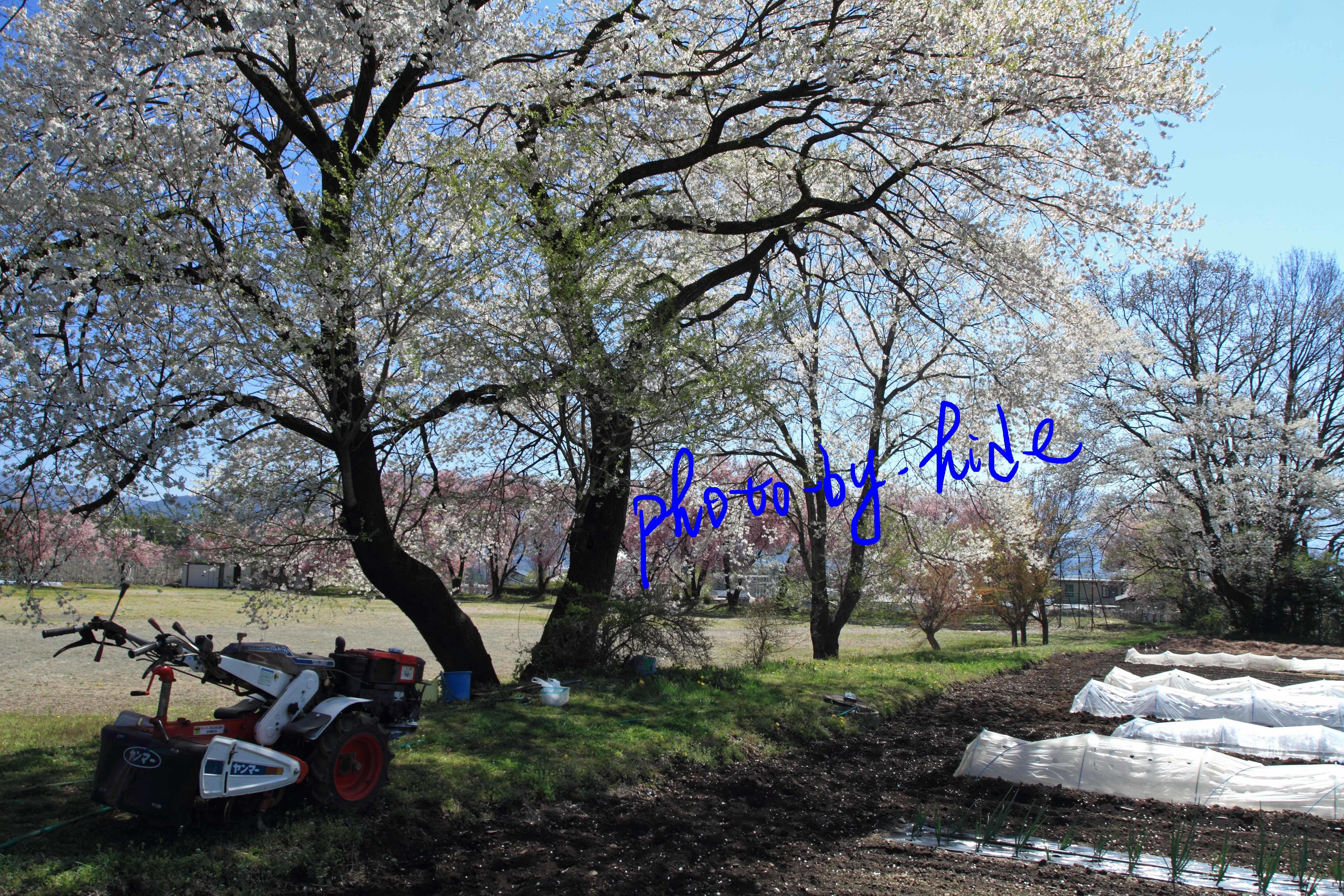 名もない公園翌日3