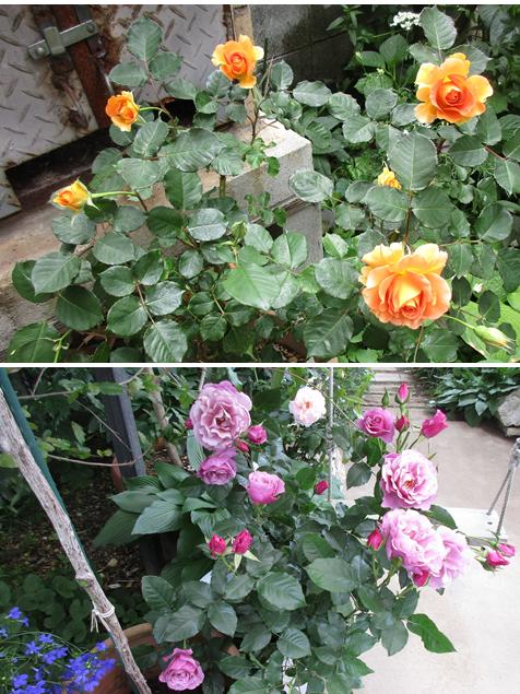 20170515花へんろ22