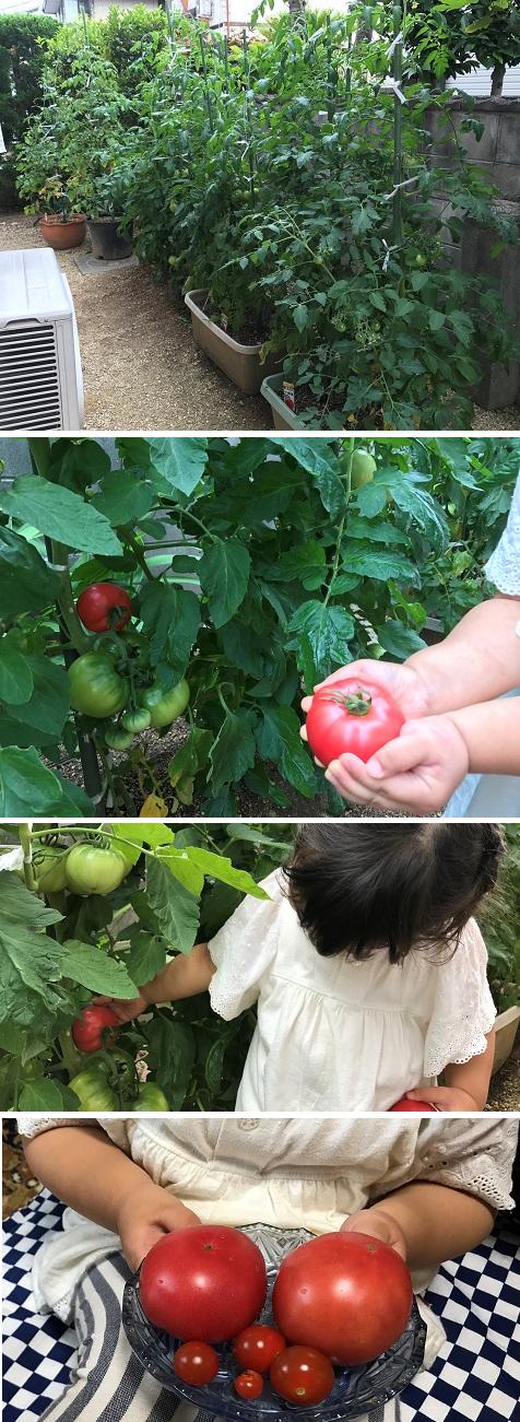 20170623トマト