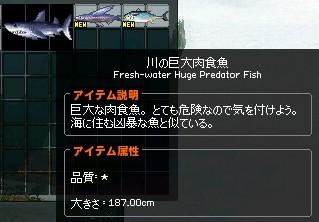 20170525_0_巨大肉食魚
