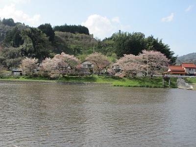 かろうじて残ってた桜の花