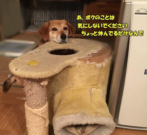 寛ぎスタイル2