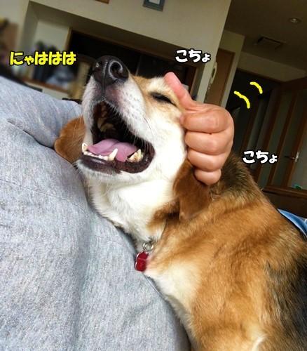 えんちゃんの日曜日