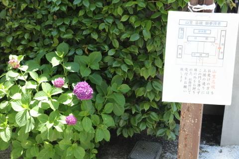 20170527ajisai.jpg