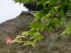 平成29年5月お花