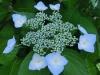 平成29年6月お花