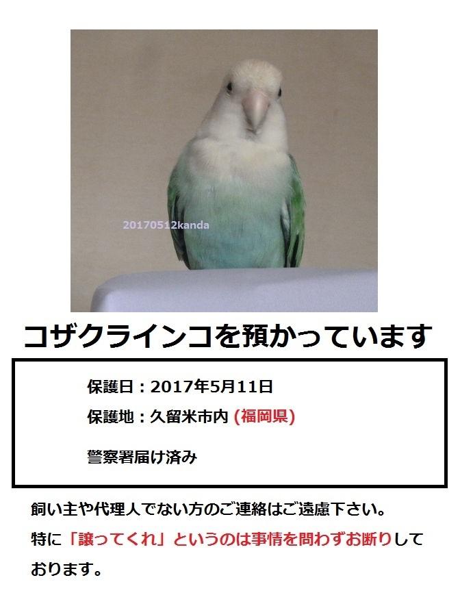 保護ポスターさくらちゃん