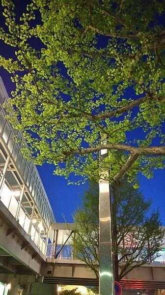 20170525用・木