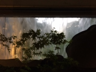 椿山荘ビオトープ滝