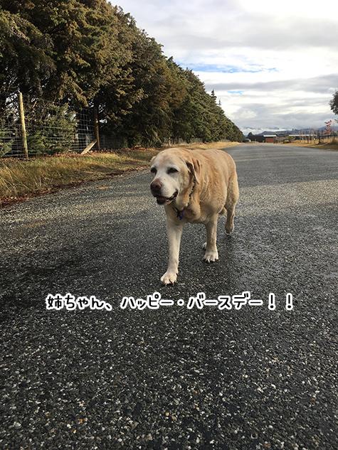 02072017_dog6.jpg