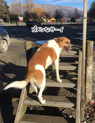 04072017_dog1.jpg