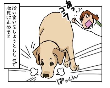 06062017_dog2mini.jpg