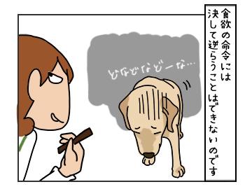 17052017_dog3mini.jpg