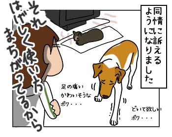 17052017_dog5mini_201705171425199f9.jpg