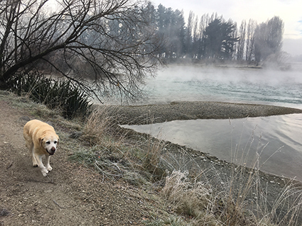 17062017_dogpic2.jpg