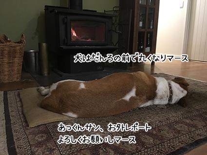 20052017_dog4.jpg