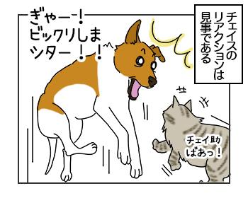 21062017_dog3mini.jpg