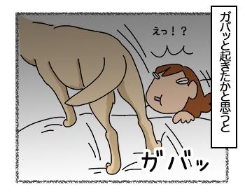 23062017_dog2mini.jpg