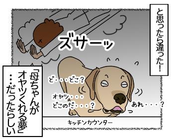 23062017_dog4mini.jpg
