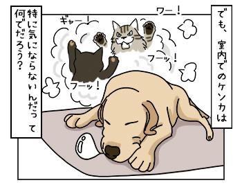 24052017_dog3mini.jpg