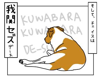24052017_dog4mini.jpg