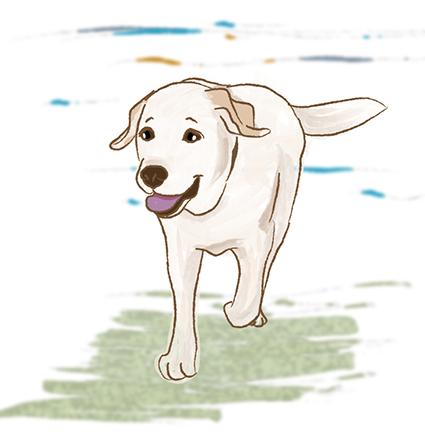 25052017_dogblog1.jpg