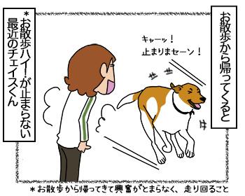 26062017_dog1mini.jpg