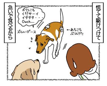 27062017_dog3mini.jpg