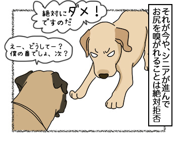 29062017_dog2mini.jpg