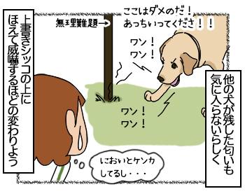 29062017_dog3mini.jpg
