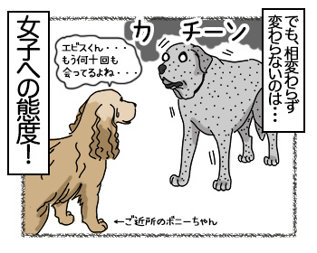 29062017_dog4mini.jpg