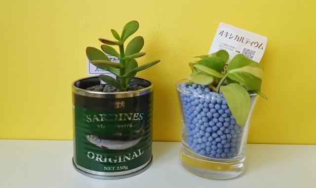 【これだけは知っておきたい!】3種類の観葉植物の形&もたらす効果2