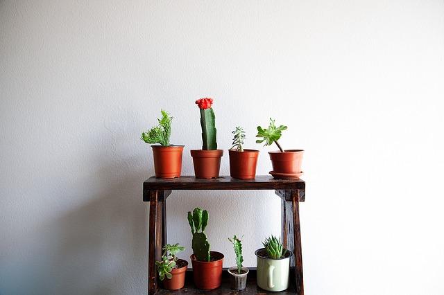 【これだけは知っておきたい!】3種類の観葉植物の形&もたらす効果5